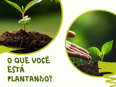 O que você está plantando?