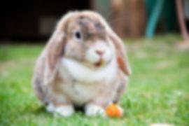 kaniner og gnavere.jpg