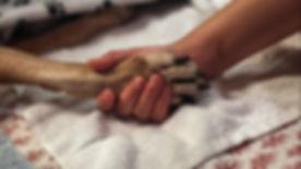 vet.euthan.jpg