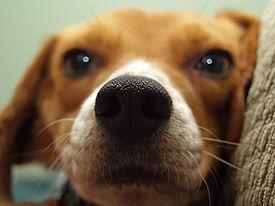 Cachorro de primer plano
