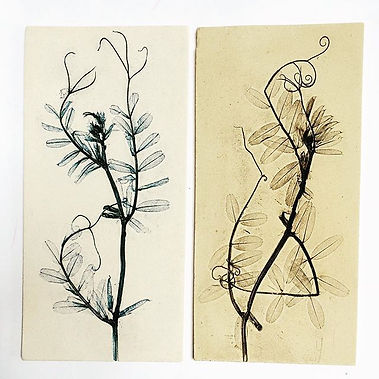 Vetch plant wall tiles, ceramic Louise Condon Designs