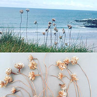 Collecting and pressing coastal flowers around Polzeath cliffs....ready to create things when I get