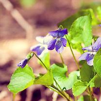 wildgardens-edibles.jpg
