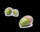 RWSpreschool-acorns.png