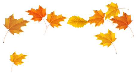 fall-leaves-clip-art-38.png