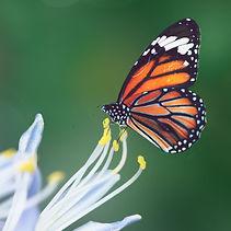 wildgardens-pollinators.jpg
