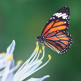 Pollinator Favorites