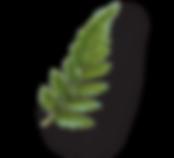 RWShomeschool-fern.png