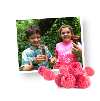 RWScamp-kidsberries450.png