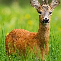 wildgardens-deerresistant.jpg