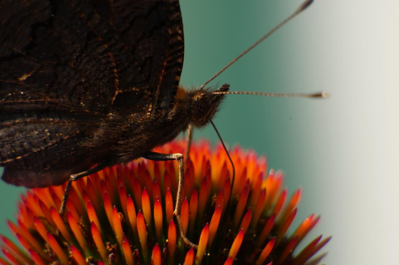 Schmetterlinge_10