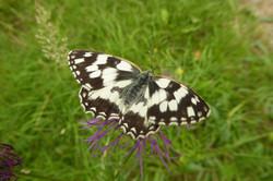 Schmetterlinge_11
