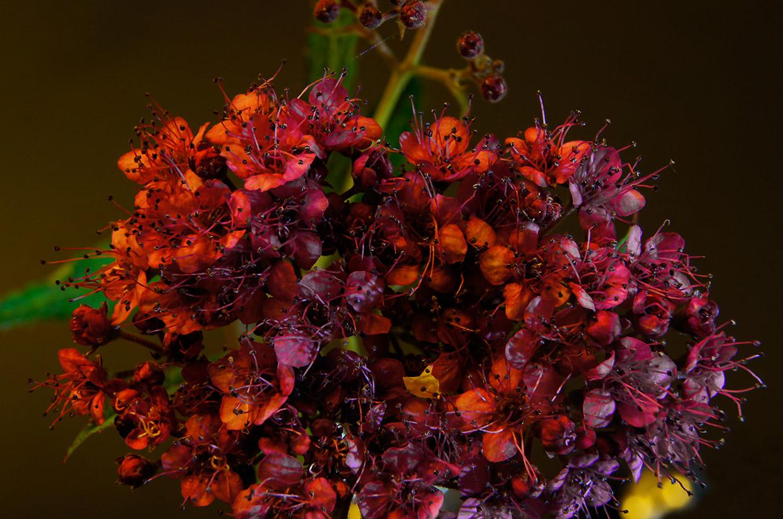 Blüten 036