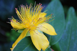 Blüten 022