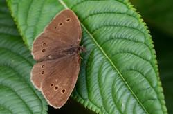 Schmetterlinge_9
