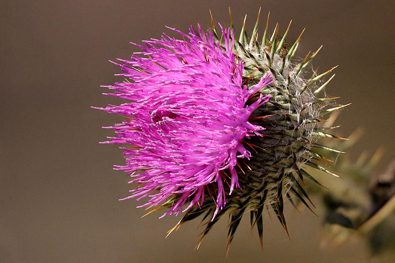 Blüten 025
