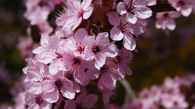 Blüten 033