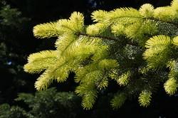 Pflanzen 002