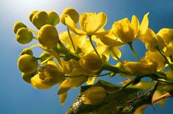 Blüten 016