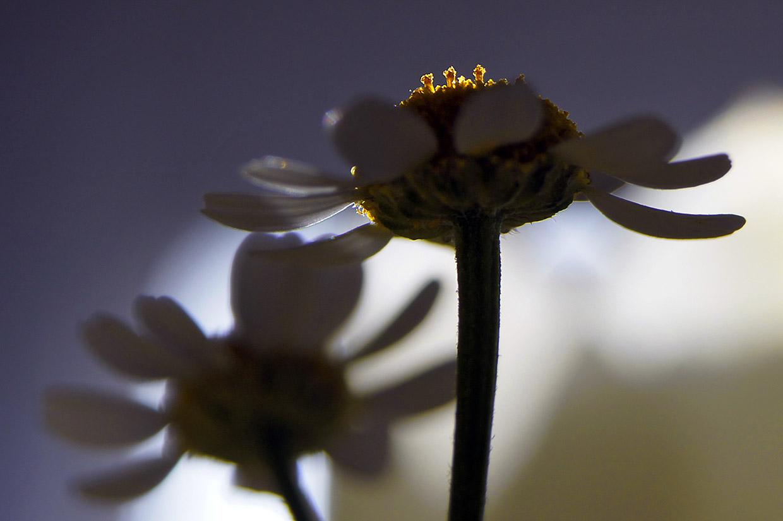 Blüten 035