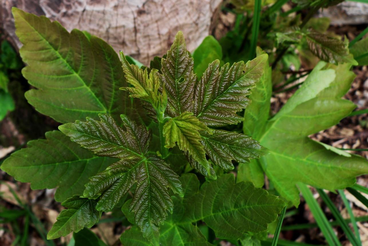 Pflanzen_7