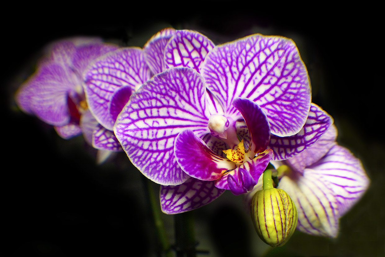 Blüten 020