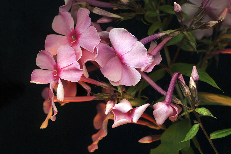 Blüten 039