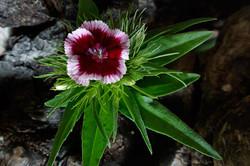 Blüten 026