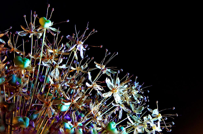 Blüten 013