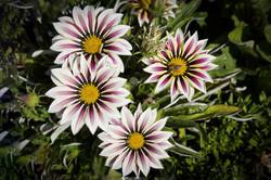 Blüten 002