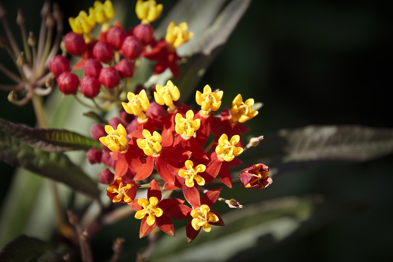 Blüten 031