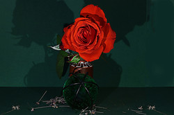 Blüten 005