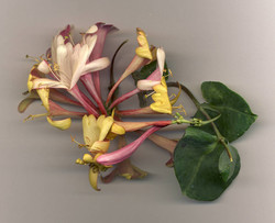Blüten 037
