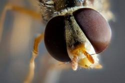 Fliege_22