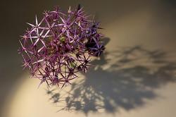 Blüten 029