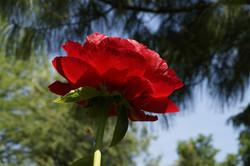 Blüten 019