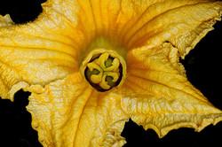 Blüten 024