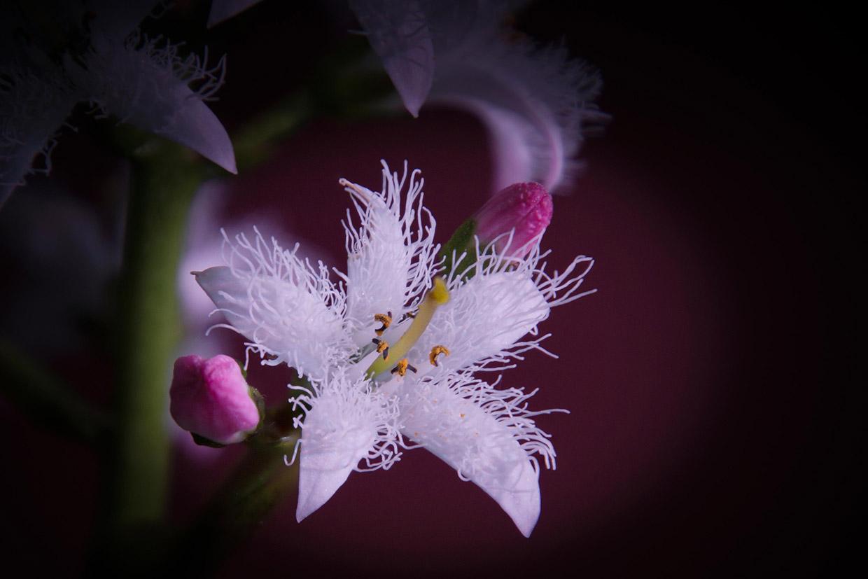 Blüten 011