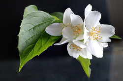 Blüten 032