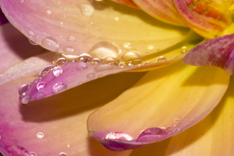 Blüten 012