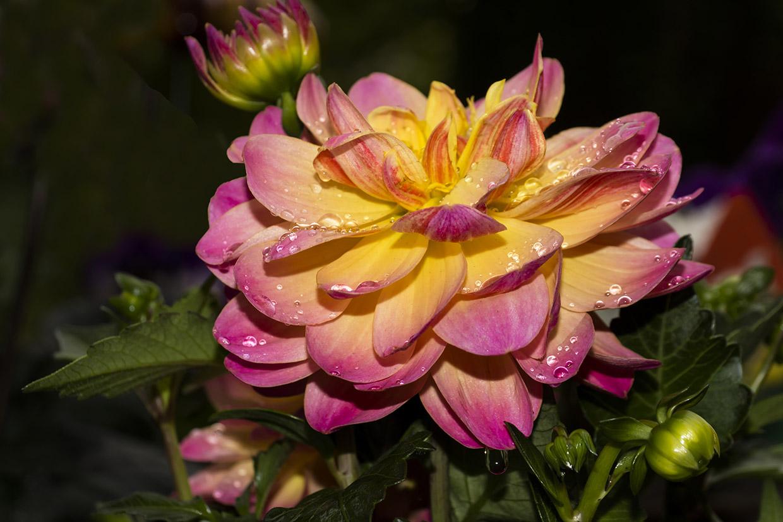 Blüten 028