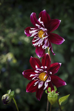 Blüten 003