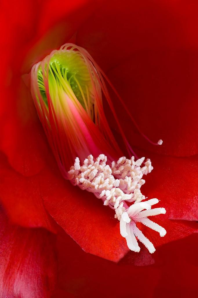 Blüten 010