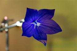 Blüten 030