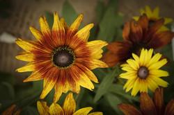 Blüten 021