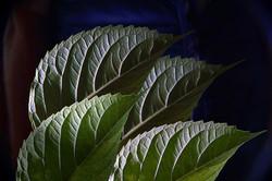 Pflanzen 009
