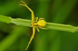 Spinnen_1