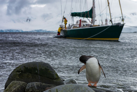Penguins in front of the yacht in Antartica