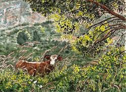 Cow near Kiryat Shmona