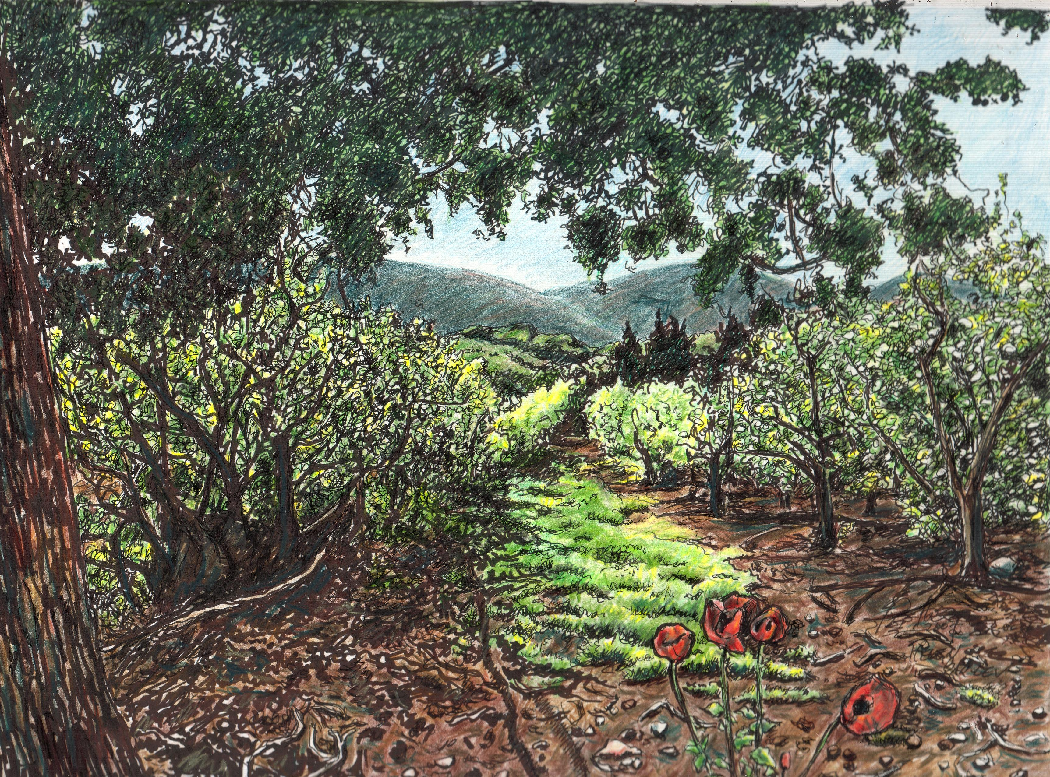 Apple orchards with poppies